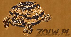 Żółwie zółw