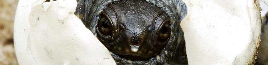 Poznaj hodowców żółwi oraz dyskutuj o prawidłowej hodowli :)